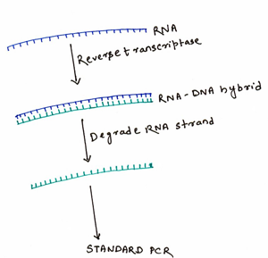 Polymerase Chain Reaction - Wiki